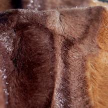Exotic Animal Print Faux Fur Minky Fabric