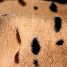 Serval Animal Print Faux Fur Minky Fabric