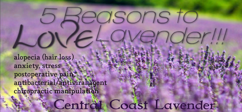 lavender-pic-quote-672x372-1.jpg