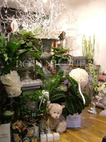 botanique-inside-ntheast.jpg
