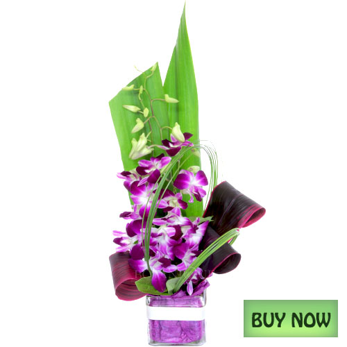cheap-flowers-online-gold-coast-australia-orchid-vase-delivered-buy-now.jpg