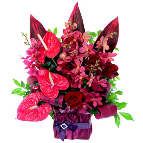 christmas flowers  posts  botanique flowers by tina gold coast, Beautiful flower