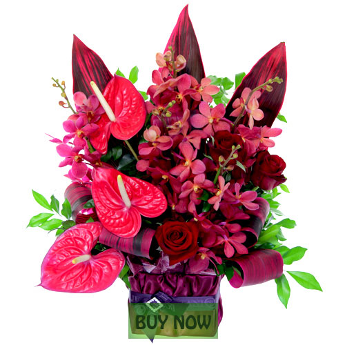 Flowers online gold coast flower delivery botanique for Plantes online
