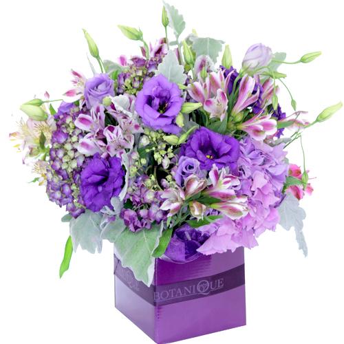 Purple Flowers Gold Coast Australia Amethyst Jpg