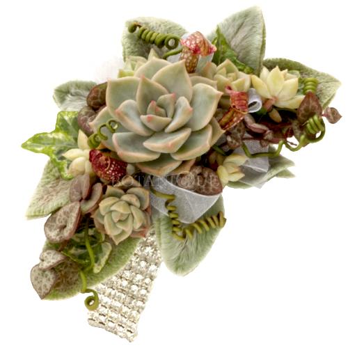 wrist-corsage-succulents.jpg