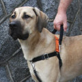 The MAX Control handle is a great way to keep your dog in total control in tight and busy places. This handle is comfortable for you and works great with your Wonder-Walker. Simply clip on the triangle on both sides of the harness with the spring loaded snaps and you have yourself an easy way to get control of any situation you and your dog might get into. Like the Wonder Walker it works with the pressure points located on your dog's shoulders, and when grabbed and pressure applied, the dog's natural instinct is to stand still.