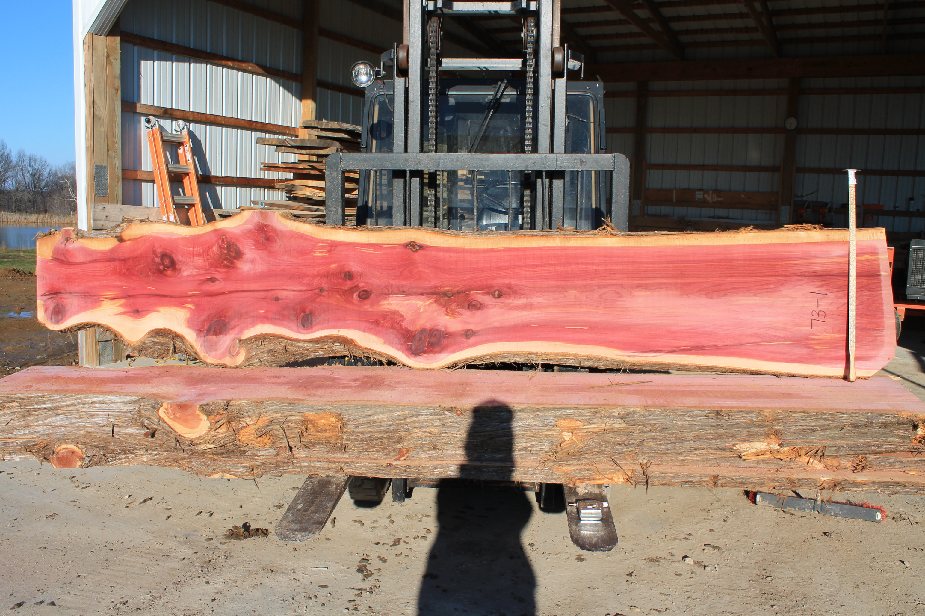 73 1 Aromatic Red Cedar Jpg
