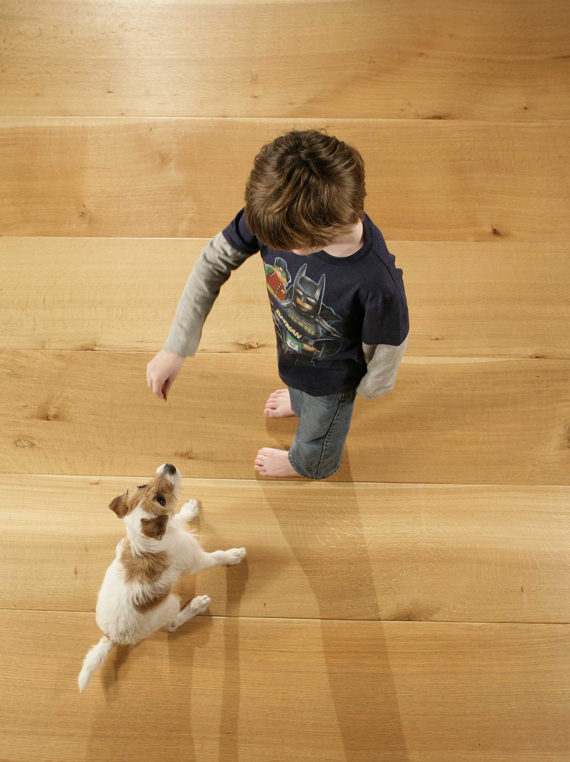 Dog and boy for Hardwood floors with dogs