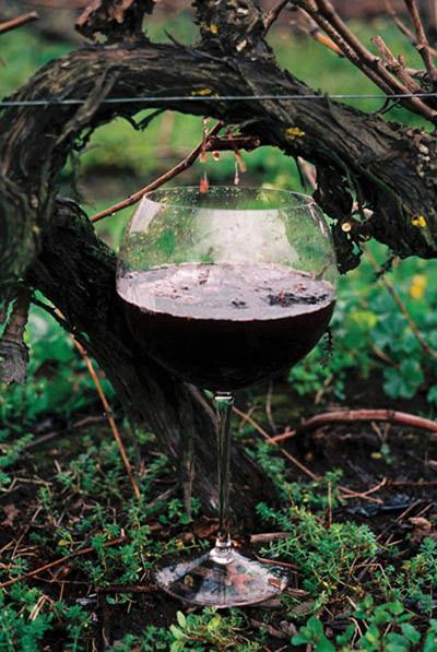 vine-drip.jpg