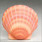 Shell Water Scattering Bio-Urn - Coral