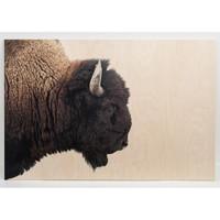 American Bison Large Wall Art