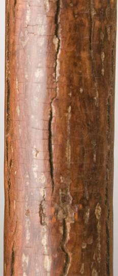 hickory.jpg