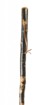 Free Form Aspen Walking Stick
