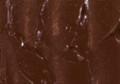 Maries Oil Color Burnt Umber