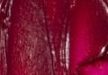 Maries Oil Color Rose 50ml