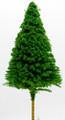 Scale Model Pine Tree 1:200
