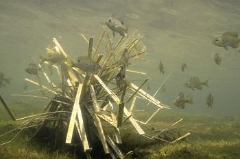 cradle shallow habitat