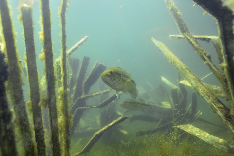 Dense habitat by Fishiding.com