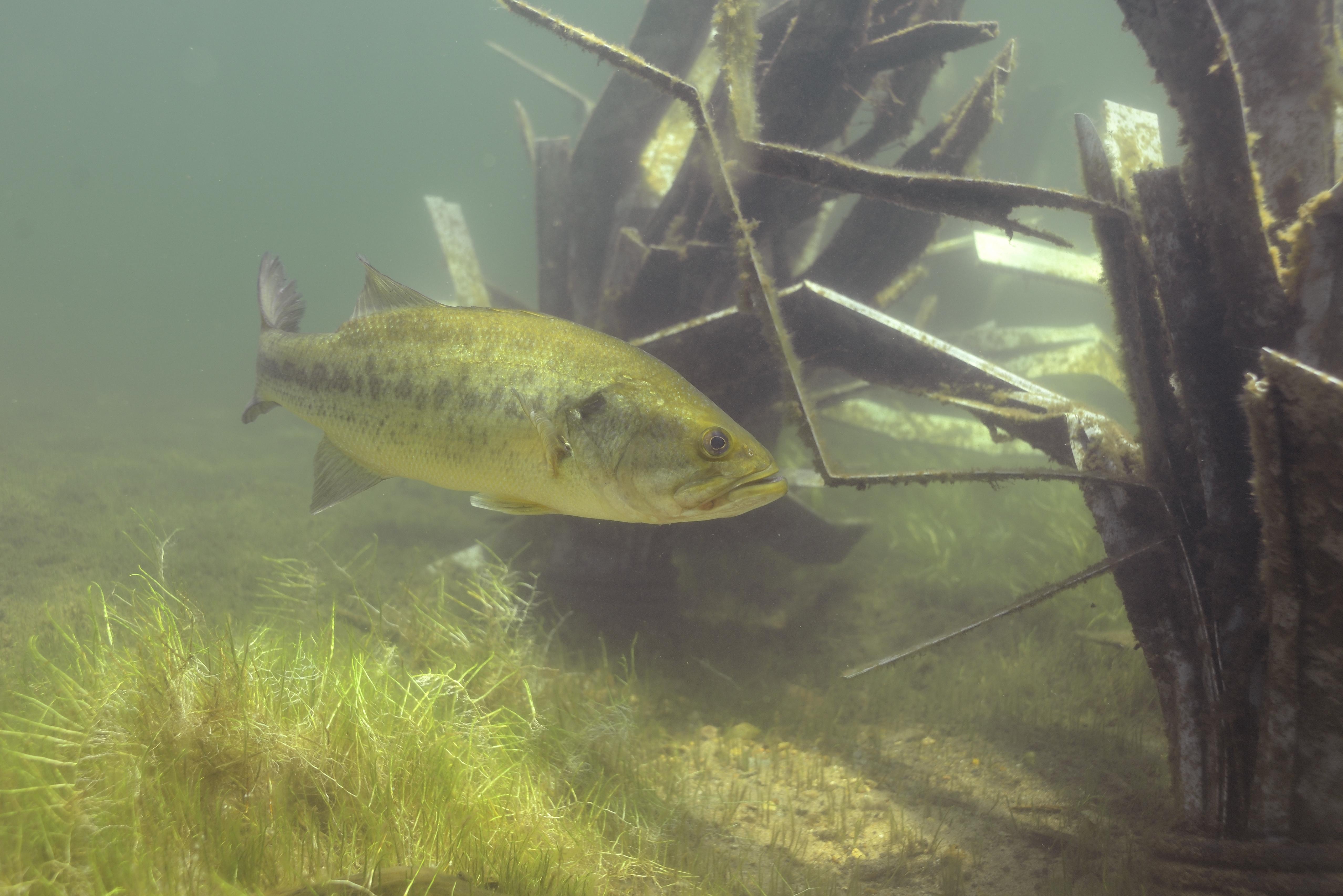 fishiding-Bunker habitat