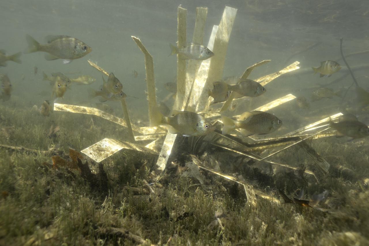 fishiding-structure-fhs-170-lowres.jpg