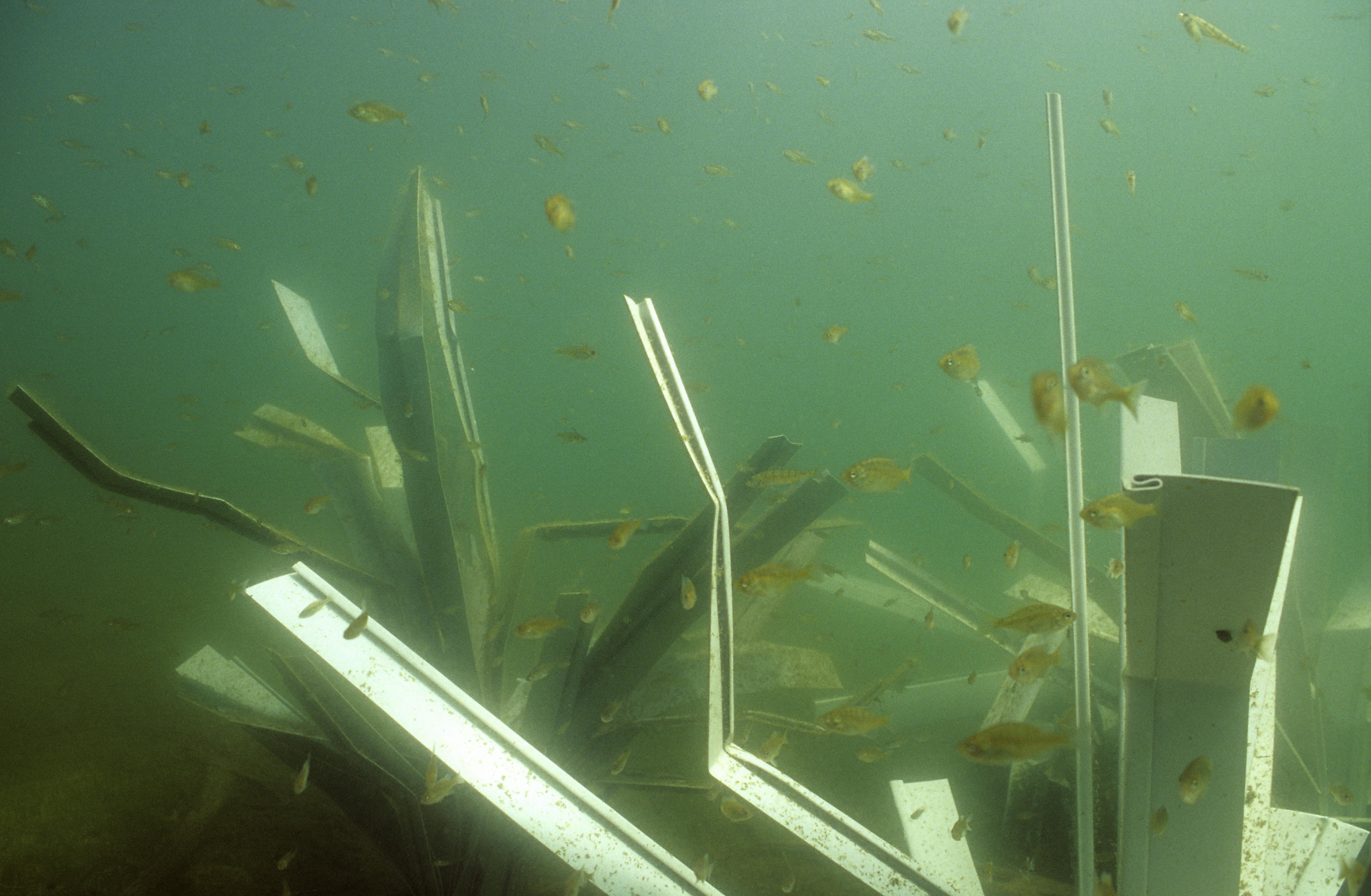 fishiding safehouse structures-