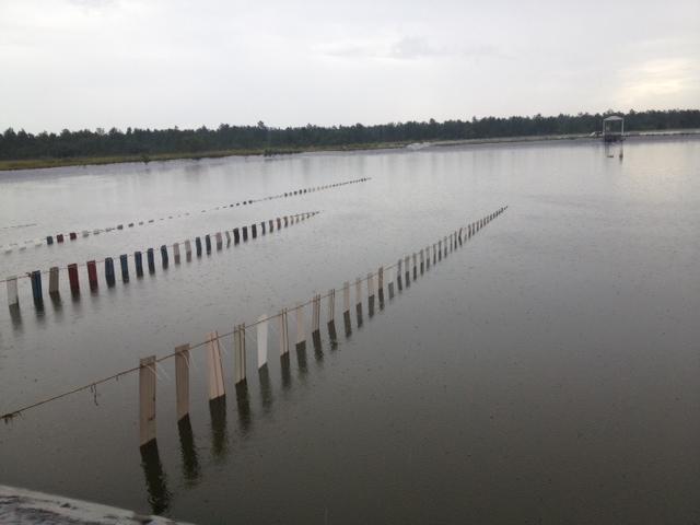 fishiding growing shrimp in Belieze