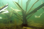 Three weeks under water safehouse Habitat