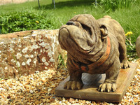 Standing British Bulldog Garden Ornament exclusively available from www.discountgardenstatues.co.uk