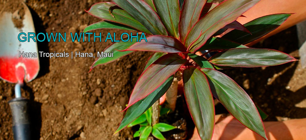 Learn more about us and how we grow the most splendid flowers in Hawaii.