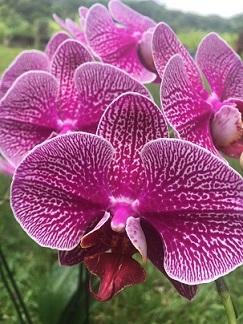 orchid1d.jpg