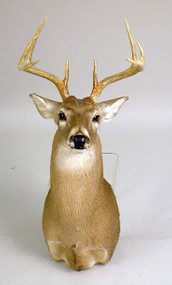 White Tail Deer Buck Taxidermy Head Mount