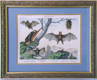 Engraving of Bats 19th Century