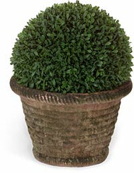 Diane James Boxwood Ball in Mossed Basket Weave Planter