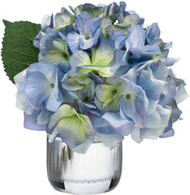 Diane James Blue Hydrangea Blossom Gift