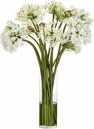 Diane James Agapanthus Bouquet in Glass Cylinder