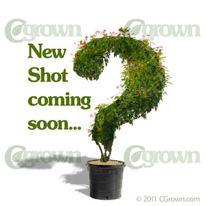Slash Pine from CGrown Nursery by Greg Davenport.