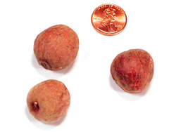 Apple Pods - Natural