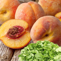 Peach Cilantro Fragrance Oil