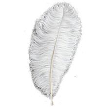 Half Pound 17-24 Inch Ostrich Wing Plumes (40+ feathers)