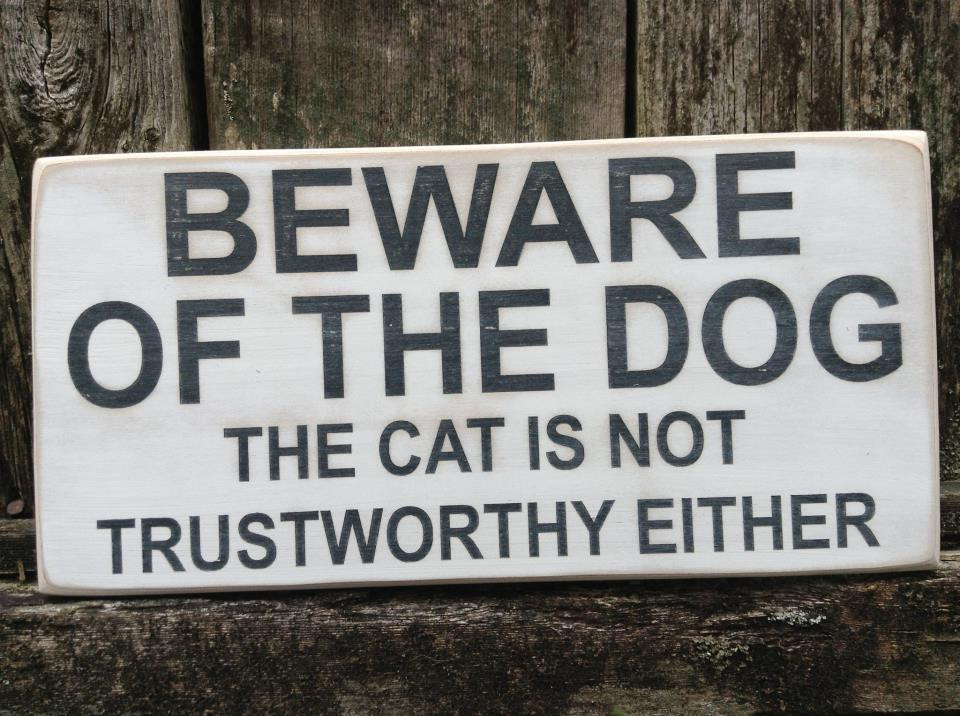 Beware The Dog But Beware The Cat Too