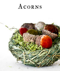 acorns-category-head-200.jpg