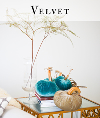 velvet-category-head-200.jpg