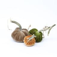 Velvet Pumpkin Trio - Classic LoveFeast