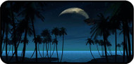 Palm Tree Moon