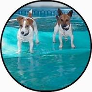 Aqua Pups BR