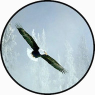 Bald Eagle BR