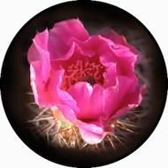 Cactus Desert Rose BR