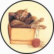 Cat Nap BR