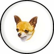 Chihuahua SH BR