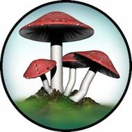 Mushroom BR